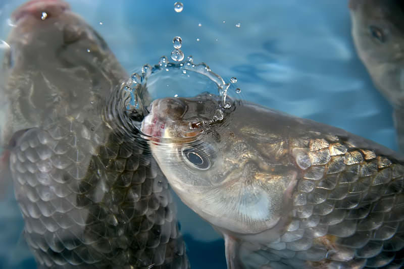 comercio internacional de pescado - apm murcia