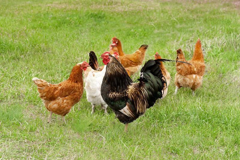 comercio internacional de carne de aves - apm murcia