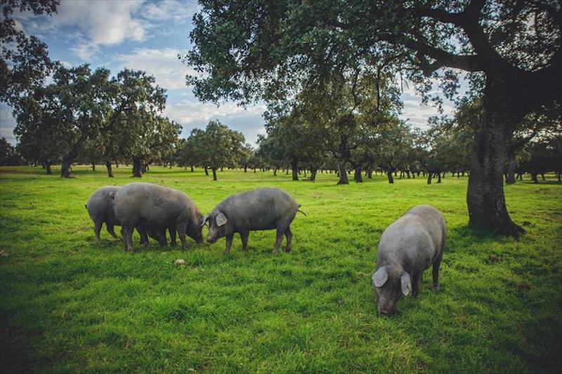 comercio internacional de carne de porcino - apm murcia